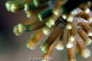 Soft coral from super macro perspective by Stan Flachs 